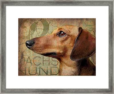 Dachshund Framed Print by Wendy Presseisen