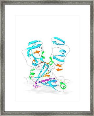 Daclatasvir And Ns5a Protein Complex Framed Print by Ramon Andrade 3dciencia