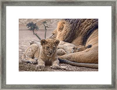 Daddy Cool Framed Print by Joachim G Pinkawa