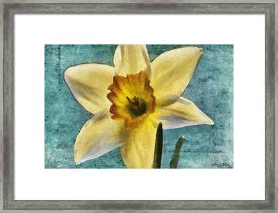 Daffodil Framed Print by Jeff Kolker