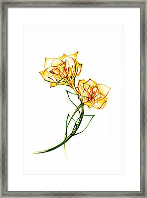 Daffodils Framed Print by Andrea Carroll