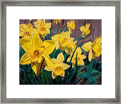 Daffodils Framed Print by Charlie Harris