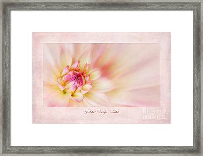 Dahlia Abridge Natalie Framed Print by John Edwards
