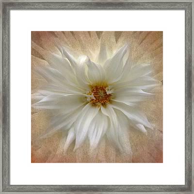 Dahlia Burst Framed Print by Angie Vogel