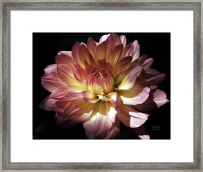 Dahlia Burst Of Pink And Yellow Framed Print by Julie Palencia