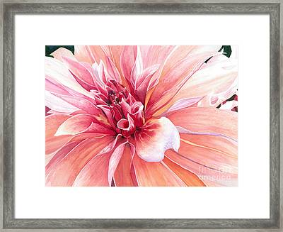 Dahlia Dazzler Framed Print by Barbara Jewell
