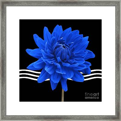 Dahlia Flower And Wavy Lines Triptych Canvas 2 - Blue Framed Print by Natalie Kinnear