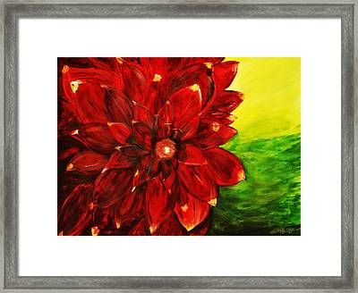 Amy's Dahlia  Framed Print by Chastity Hoff