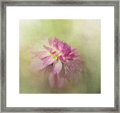 Dahlia Refreshed Framed Print by Angie Vogel