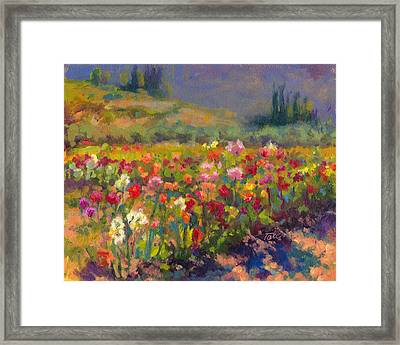 Dahlia Row Framed Print by Talya Johnson