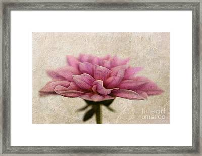 Dahlietta Amy Textured Framed Print by John Edwards