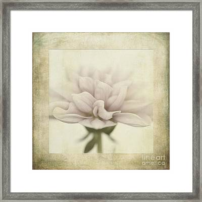 Dahlietta Textures Framed Print by John Edwards