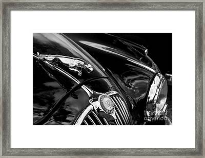 Dahling Ive Got A Jaaag  Framed Print by Rob Hawkins