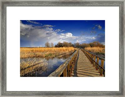 Daimiel Lake Framed Print by Guido Montanes Castillo