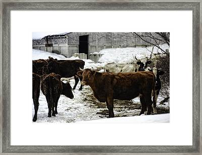 Dairy Queen Framed Print by Lisa Bryant