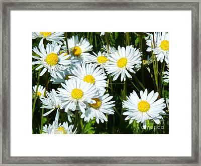 Daisies Artwork Framed Print by Lutz Baar