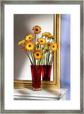 Daisies In Red Vase Framed Print by Tony Cordoza
