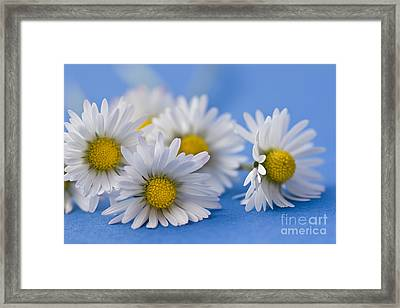 Daisies On Blue Framed Print by Jan Bickerton