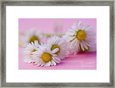 Daisies On Pink Framed Print by Jan Bickerton