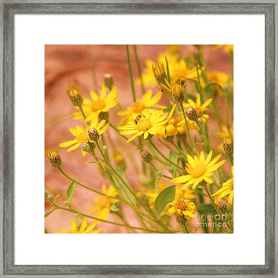 Daisy A Day Series  Framed Print by Julie Lueders