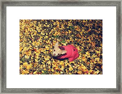 Daisy And A Blanket Of Gold Framed Print by Laurie Search