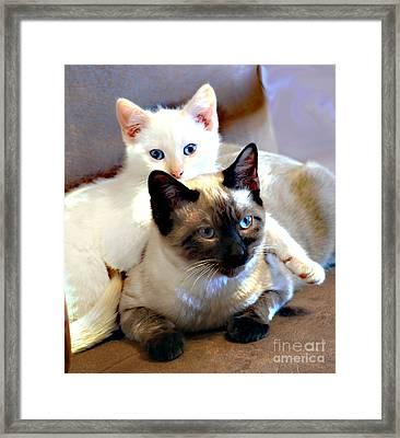 Daisy And Leo Framed Print by Linda Cox
