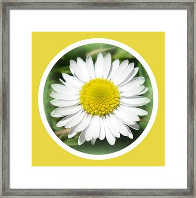 Daisy Closeup Framed Print by The Creative Minds Art and Photography