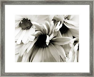 Daisy Cluster In Black And White Framed Print by Nancy E Stein