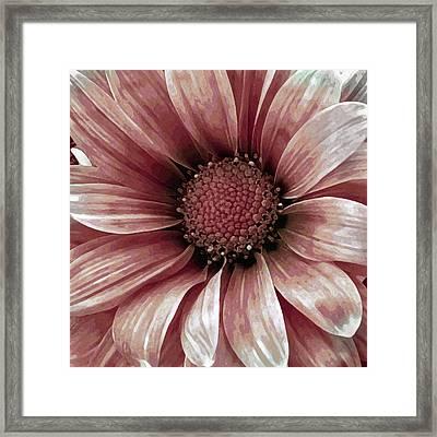 Daisy Daisy Blush Pink Framed Print by Angelina Vick
