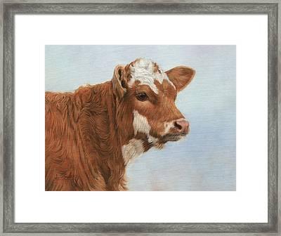 Daisy Framed Print by David Stribbling