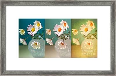 Daisy Daydreams Framed Print by Susan Gary