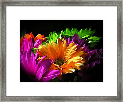 Daisy Delight Framed Print by David Quist