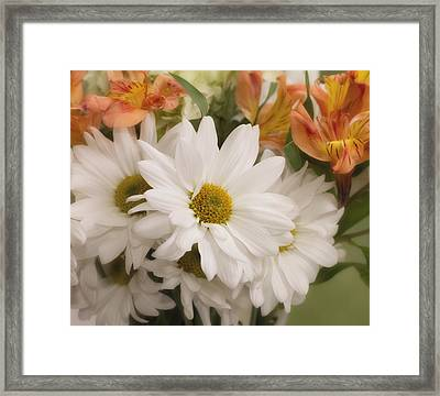 Daisy Do Framed Print by Kim Hojnacki
