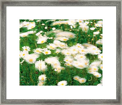 Daisy Flowers With Blur Motion Framed Print by Panoramic Images