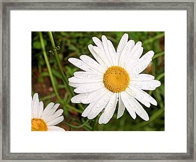 Daisy Freshness Framed Print by Kristin Elmquist