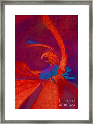 Daisy Fun - A03ct02 Framed Print by Variance Collections