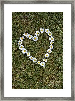 Daisy Heart Framed Print by Tim Gainey