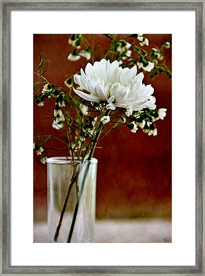 Daisy Mum On Red 3 Framed Print by Angelina Vick