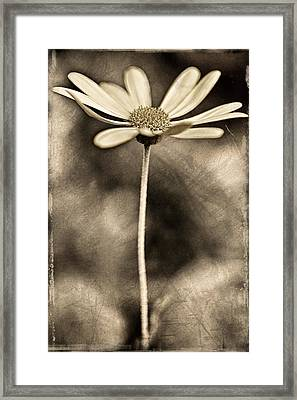 Daisy On Metal Framed Print by Carol Leigh