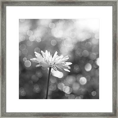 Daisy Rain Framed Print by Theresa Tahara