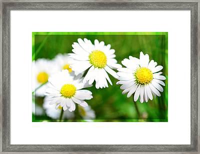 Daisy Framed Print by Toppart Sweden