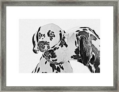 Dalmatians - A Great Breed For The Right Family Framed Print by Christine Till
