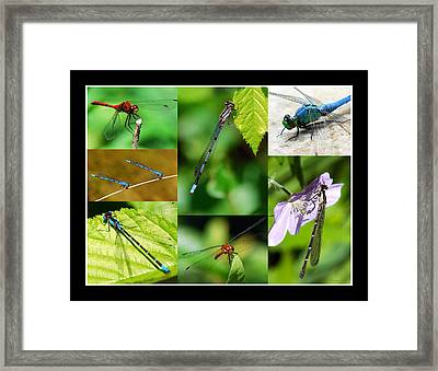 Damsels And Dragons Framed Print by Christina Rollo