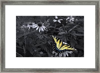 Dance In The Garden Framed Print by Don Spenner