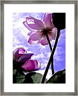 Dance Of The Lotus Framed Print by Larry Knipfing
