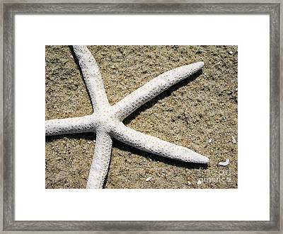 Dance Of The Starfish Framed Print by Colleen Kammerer
