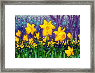 Dancing Daffodils    Cropped Framed Print by John  Nolan