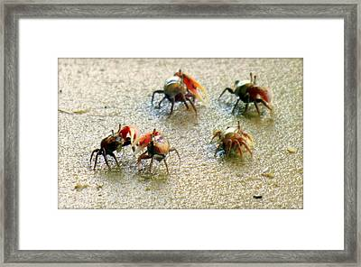 Dancing Of The Fiddlers Framed Print by Karen Wiles