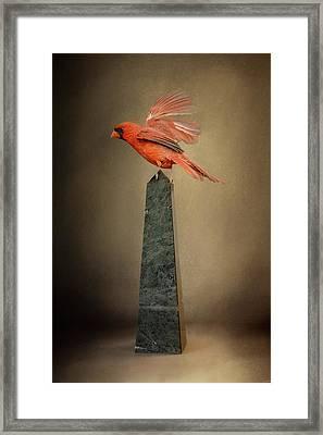 Dancing On Marble Framed Print by Jai Johnson