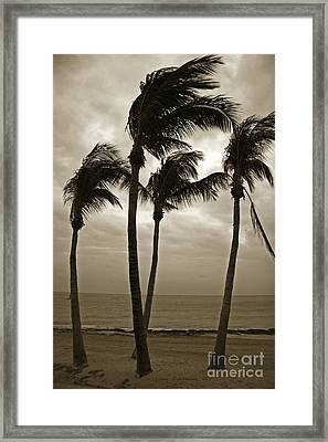 Dancing Palm Trees - Key West Casa Marina Framed Print by John Stephens